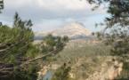 La colline de la Sainte-Victoire classée aire protégée par l'UICN