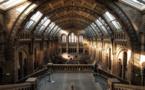 L'Unesco lance un appel mondial pour soutenir les musées