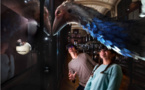 Au Muséum d'histoire naturelle, les animaux disparus sont à l'honneur