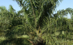 Total s'engage à se détourner de l'huile de palme d'ici 2023