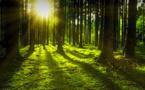 L'UE lance un plan forêt dans le cadre de sa politique anti émissions de CO2