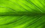 Le « pilier vert » du plan de relance est engagé, affirme le gouvernement