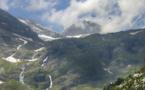 Pyrénées : nouveau souffle pour le programme de réintroduction des ours