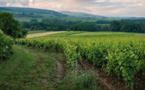 Pesticides viticoles : une étude nationale pour évaluer les conséquences de l'exposition