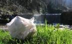 Commission européenne, haro sur les sacs en plastique