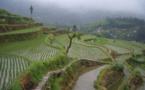 3,3 millions d'hectares de terres agricoles polluées en Chine