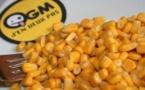 OGM, le maïs MON 810 est interdit en France