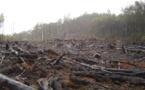 La FAO veut une meilleure collecte des données pour lutter contre la déforestation