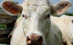 L'impact de la viande bovine sur l'environnement