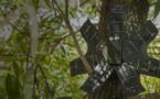 Recycler les smartphones peut aider à lutter contre la déforestation