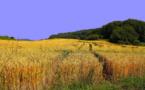 Les producteurs de blé demandent un versement anticipé des aides PAC
