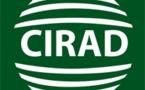 Le CIRAD met en avant le concept de « service écosystémique »