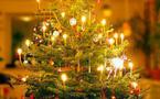Sapins de Noël, des points de collectes pour permettre le recyclage à Paris