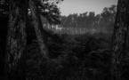 Le journal Le Monde se penche sur la « criminalité écologique »