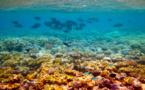 « La Grande Barrière de corail, un futur dépotoir ? » s'interroge le WWF