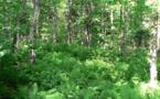 L'examen parlementaire de  la loi biodiversité est lancé