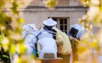 Pour que Paris soit candidate au label « bee-friendly »