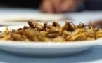 Les risques sanitaires de la consommation d'insectes