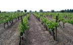 Le vin aussi se met à la norme ISO 26000