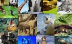 En trois siècles 7% des espèces animales terrestres ont disparu