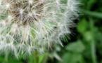 Le Foreztival, un événement populaire et écologique