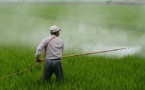 Des associations demandent une interdiction réelle des pesticides