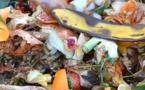 Environnement : les bienfaits du compostage partagé