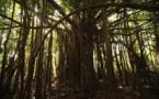 Déforestation en Amazonie, la surveillance électronique comme solution