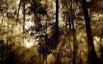 Congrès forestier mondial : un partenariat aux objectifs ambitieux