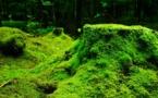 Le Congrès forestier mondial se tiendra cette année en Afrique