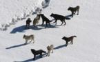 Hautes-Alpes : une manifestation autour de la problématique du loup