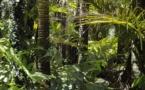 Forêts d'Amazonie : 20 ans pour reconstituer leur stock carbone