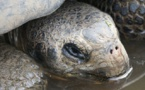 Record des naissances de tortues cistudes en 2015