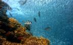 Environnement : la France étend son domaine sous-marin