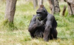 Rwanda : stimuler l'éco-tourisme et les efforts de conservation du pays
