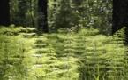 L'environnement dans la grande région : une place difficile à trouver
