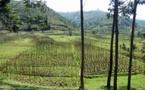 """Le Rwanda, """"pionnier vert"""" de l'Afrique"""
