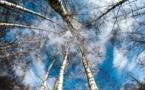 Contre la pollution des sols, la phytoremédiation