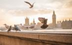 Pollution : les pigeons pourraient la détecter