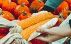 Conversion au Bio, FNE veut plus d'argent public