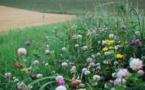 """""""Biodiversité"""", le projet de loi examiné à l'Assemblée nationale"""