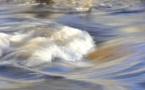 Une rivière bretonne polluée au beurre