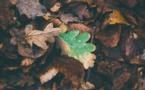 Contre le greenwashing il faut « prouver la véracité (des) affirmations écologiques »