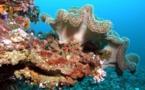 Australie : les particules de charbon étouffent les coraux