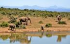 Danemark : un zoo veut relâcher ses éléphants pour protéger les écosystèmes