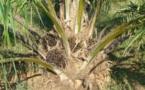 Les députés abandonnent la taxe sur l'huile de palme
