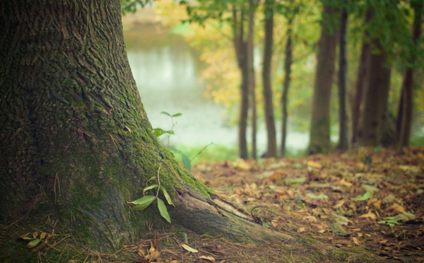 La forêt de Tronçais pourrait être la prochaine forêt française labellisée