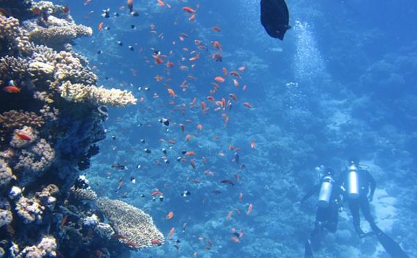 La Polynésie française au rendez-vous pour la conférence sur les océans
