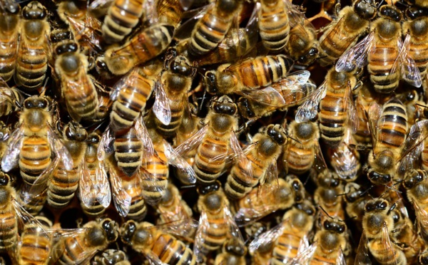 Installer une ruche en entreprise, une démarche facile et vertueuse