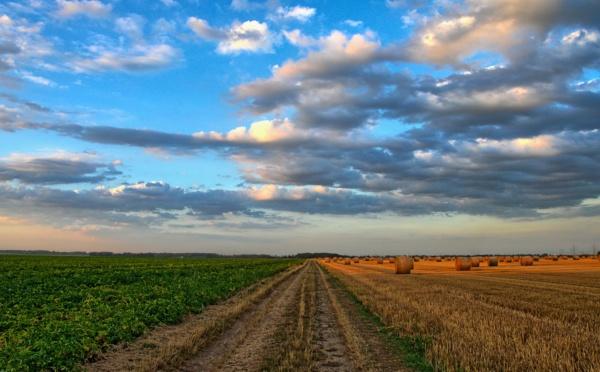 Plan de relance : sur le 1,2 milliard d'euro dédié l'agriculture, la place de la transition écologique en question